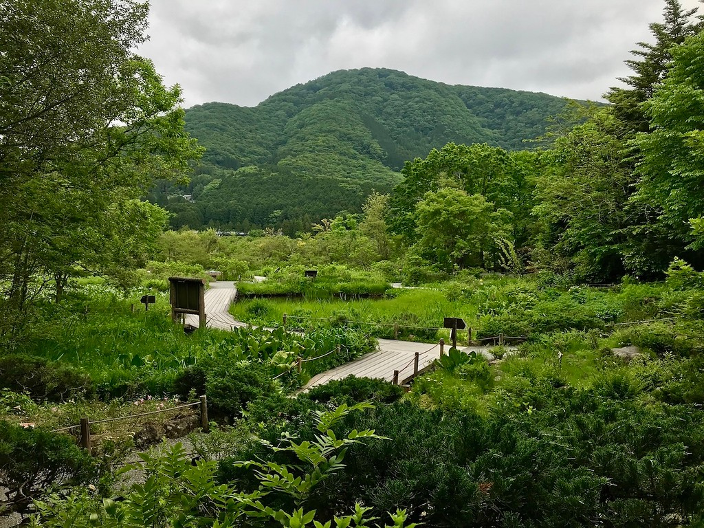 Inside the Hakone Botanical Gardens of Wetlands.