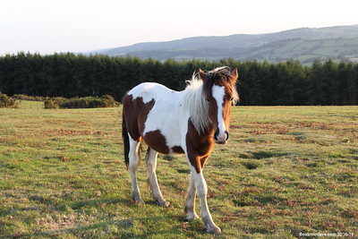 Horses - Set 4