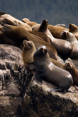 Sea Animals - Sea Lions and Seals
