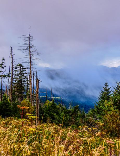 Smoky Mountains 158