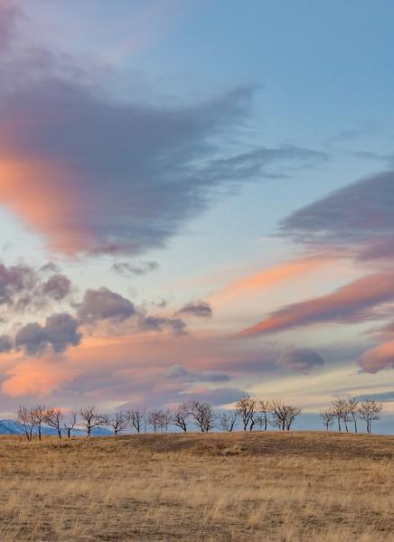 Pastel Prairie