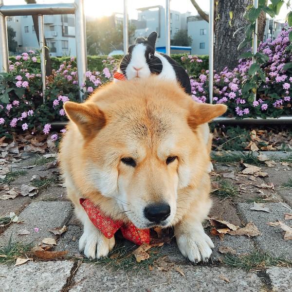 《寵物攝影》拍寵物超難?飼主必學 / 手機拍攝技巧大公開