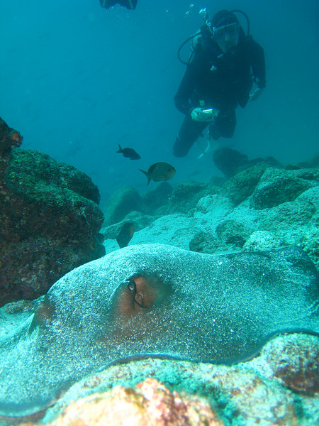Diving in the Galapagos (166 of 392)