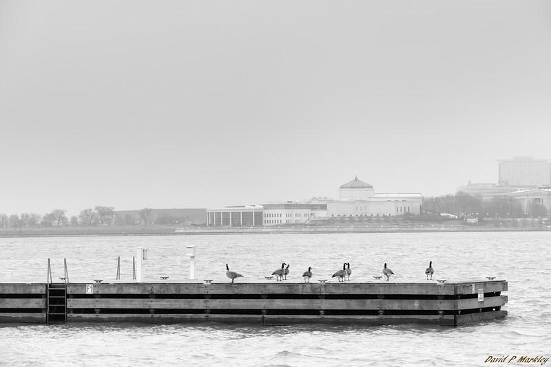 Dock Flock
