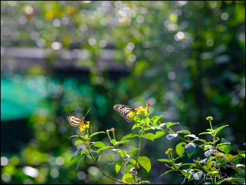 200104 KL Butterfly Park 28.jpg