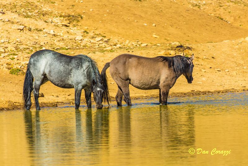 2 Watering Mustangs-1-2a.jpg