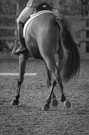 Lincomb Equestrian Unaffiliated Dressage, 5th March 2017