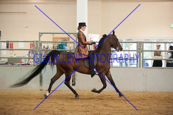 Continental Divide Horse Shows