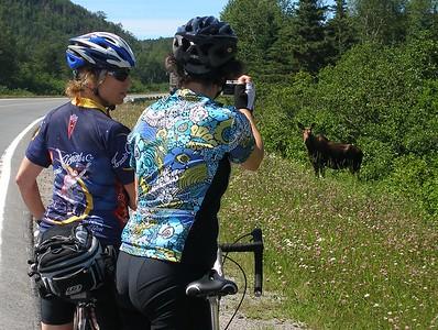 Canada: Nfld Viking Trail Bike