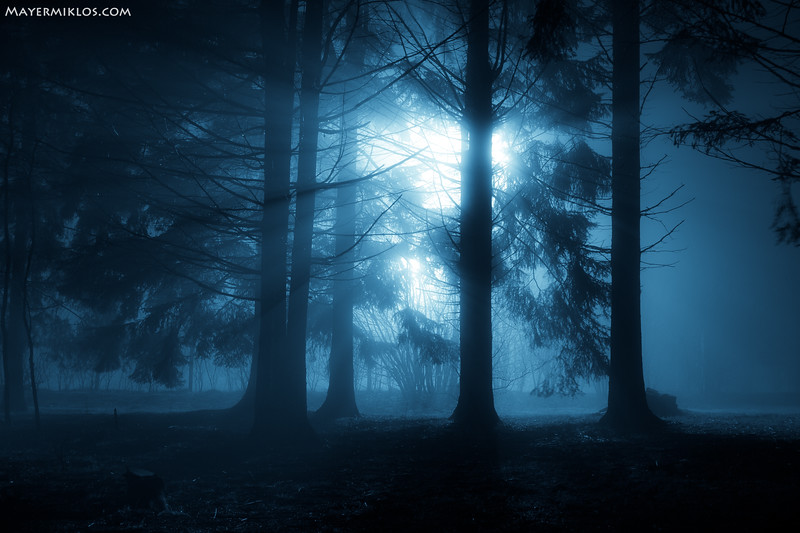 foggy forest in blue.jpg