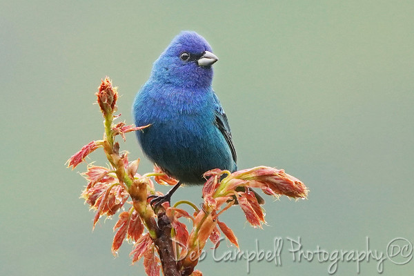 Wild Birds of Tennessee