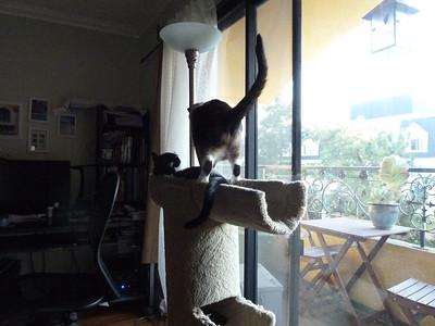 cats-201210