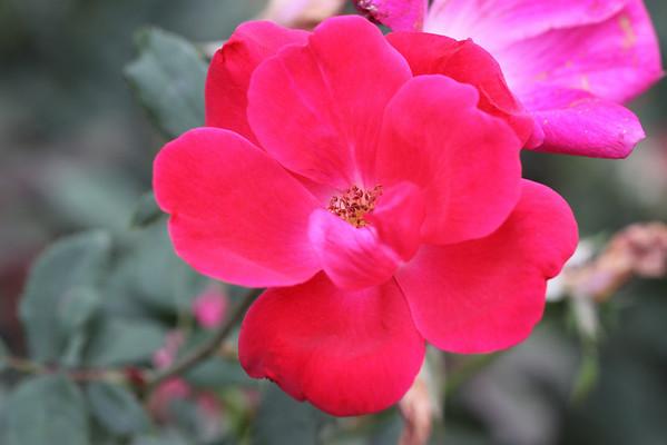 Botanical Garden 2010