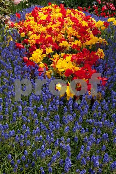 Tulips 5317.jpg