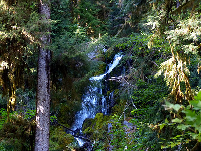 Hoh River Trail - Mineral Falls - August 24, 2021