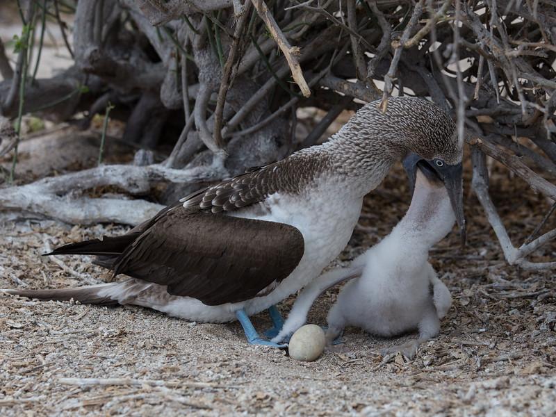 Galapagos_MG_4193.jpg