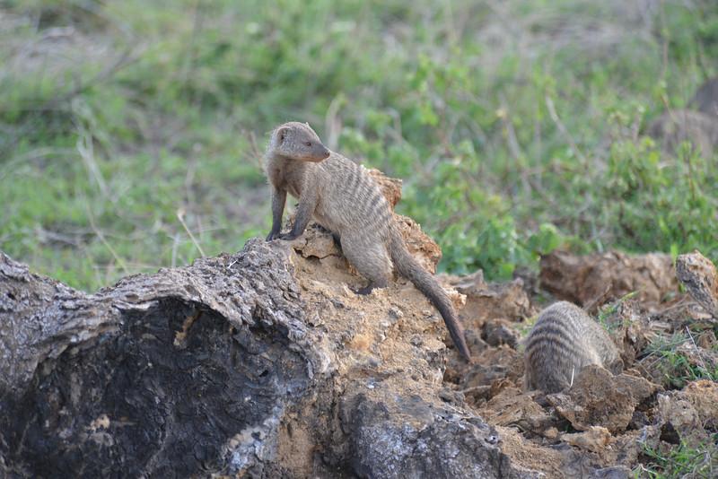 East Africa Safari 351.jpg