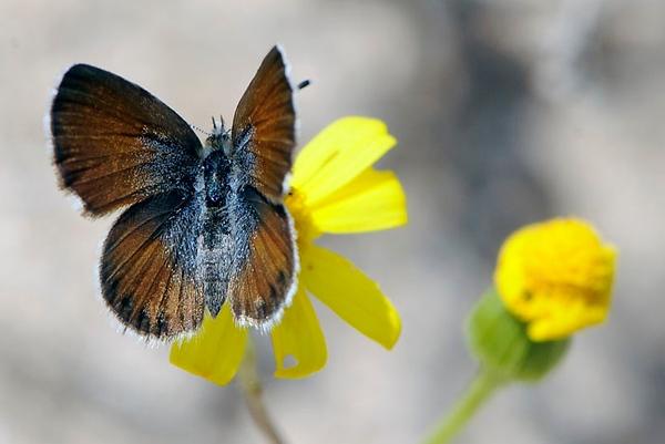 Un-identified moth or butterfly
