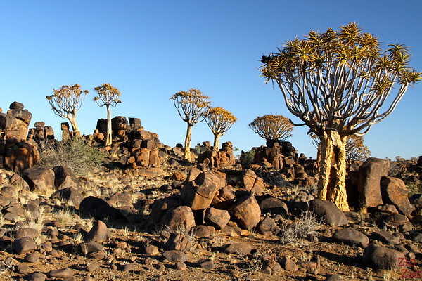 Best photo Namibia: Quiver Trees & Giants' playground