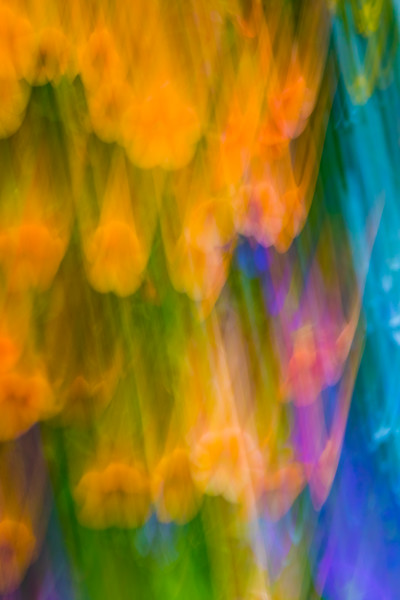 Bright yellow flowers are streaked and blurred in a flurry of activity in an abstract photo
