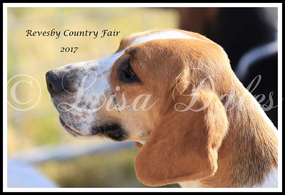 REVESBY COUNTRY FAIR 2017