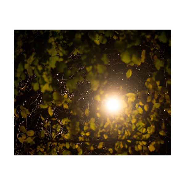 313_Lightleaves_10x10.jpg