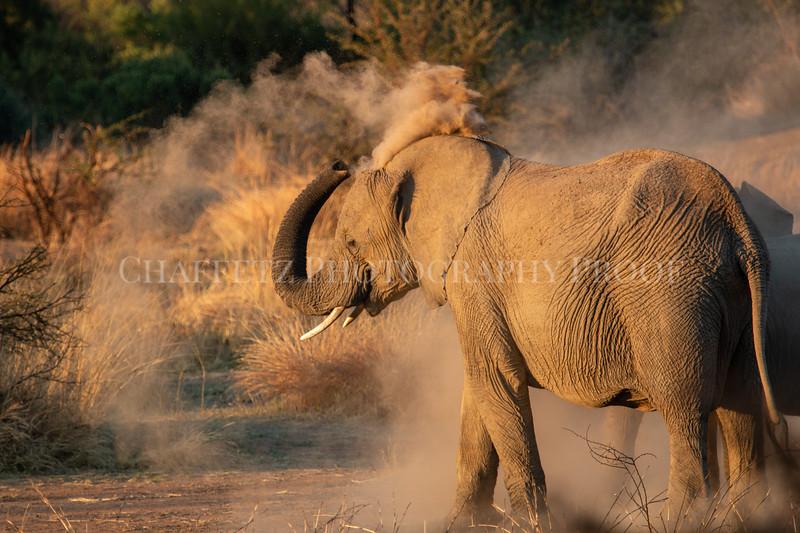ElephantDust.jpg