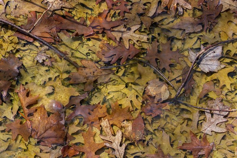 Decaying-leaves-trianglebog.jpg