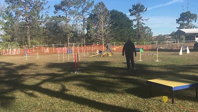 Indy Agility runs