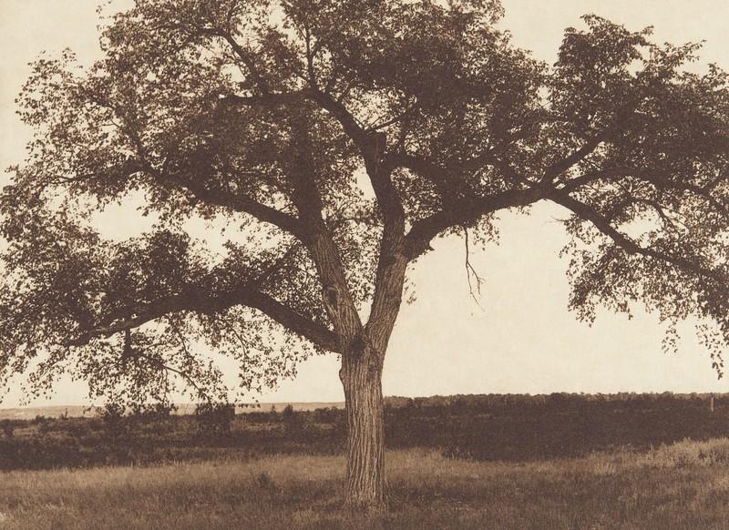 The Mythic Tree [Hidatsa] (Indians of North America, v. IV. Cambridge, MA: The University Press, 1909)