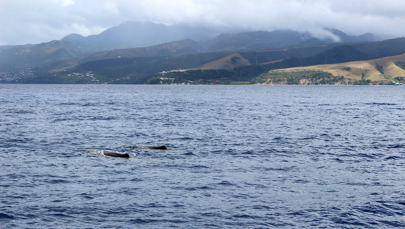 Caribbean-Dominica13.JPG