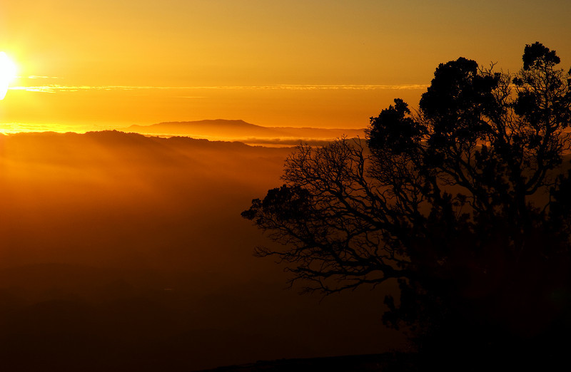 Mt Tamalpais in Golden Light