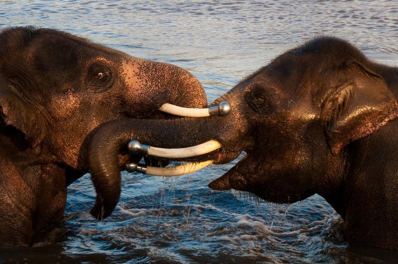 african safari Park-Canada-30.jpg