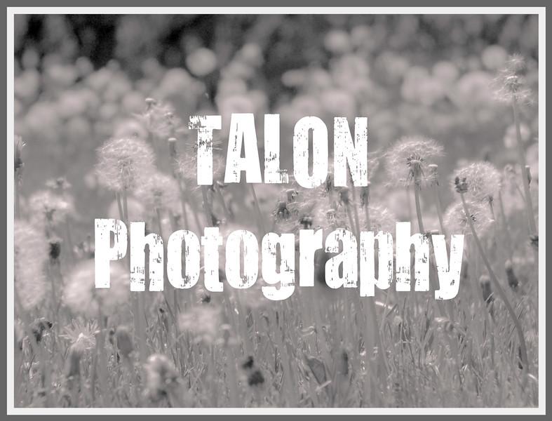 TP Grey Border Dandelions.jpg
