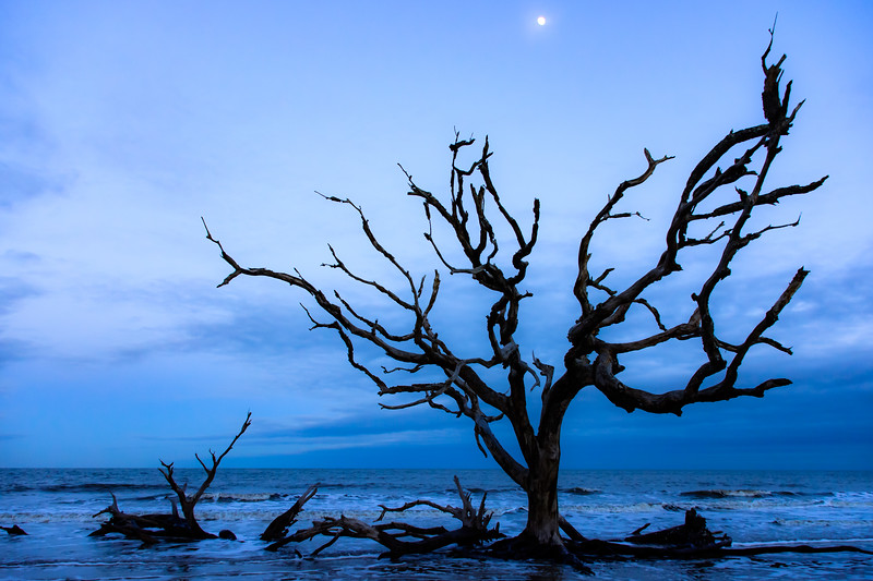 Moonrise on Driftwood Beach
