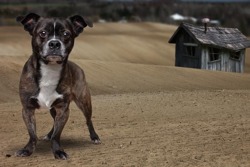 acton-dog.jpg
