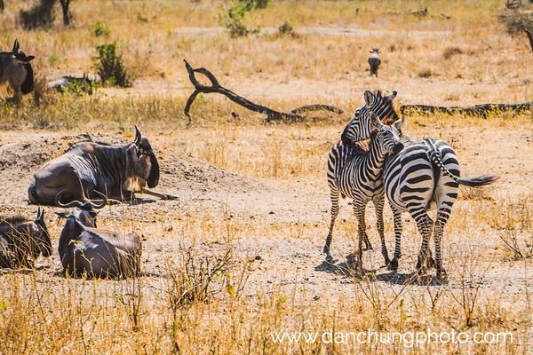 Tanzania Safari 2018