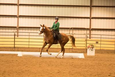 Horse 647