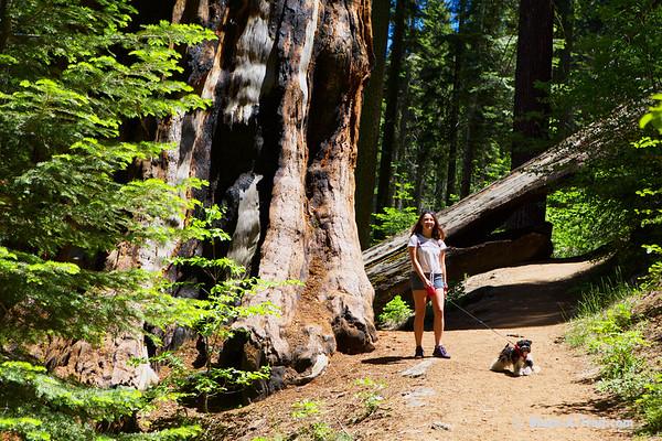 National Parks Tour (Sequoia, Kings Canyon, Yosemite & Redwoods NPs)