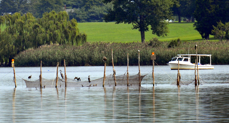 Heron and Friends