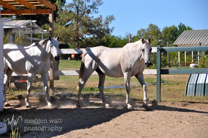 EB&Horses-125.jpg