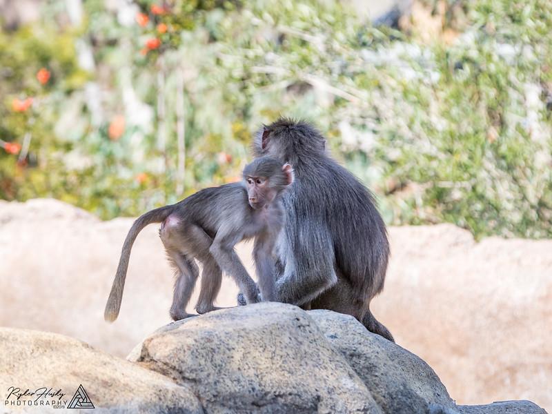 San Diego Zoo and Safari Park-092.jpg