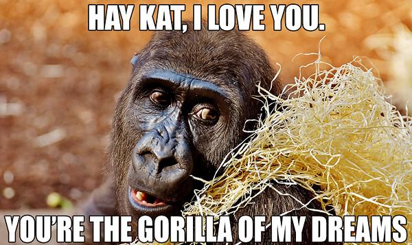 Gorilla of My Dreams.jpg