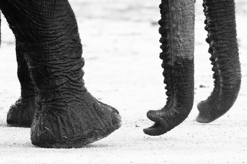 Elephant bits.