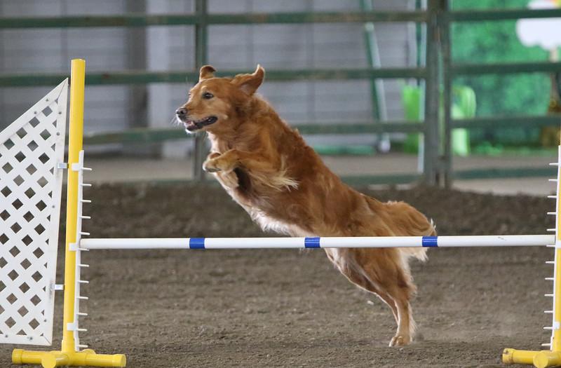 3-10-2019 Bloodhound-0631.jpg