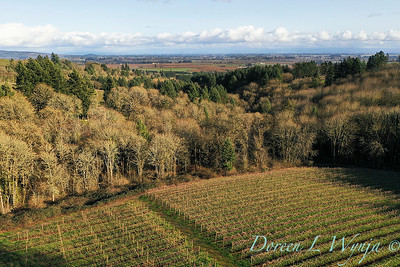 Vineyards & Valley from the sky