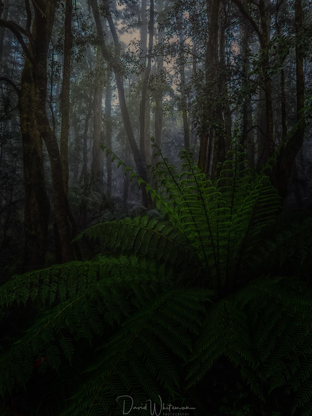 Mount Wilson Rainforest