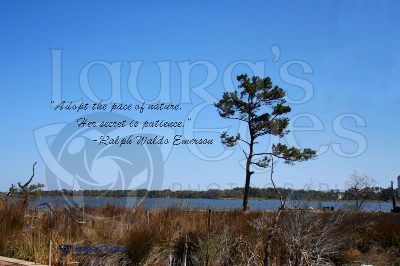 Life Quote_3.OBX.jpg