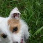 farley pups 053-2.jpg