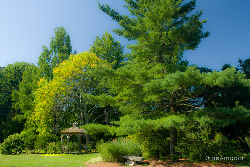Cylburn Arboretum-aeamador-0242.jpg
